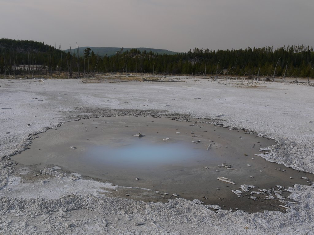 Pearl Geyser, Norris Geyser Basin, Yellowstone National Park, Wyoming