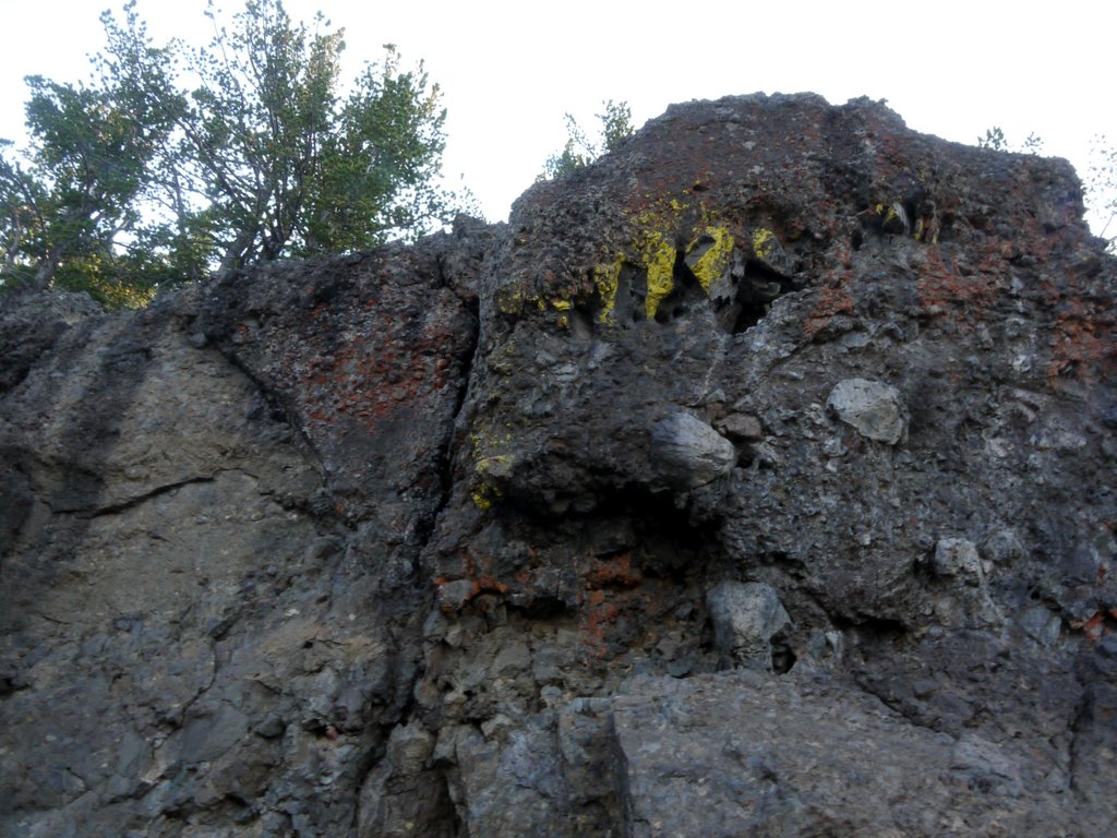 Rock with yellow and red lichen, Mt. Washburn, Yellowstone National Park, Wyoming
