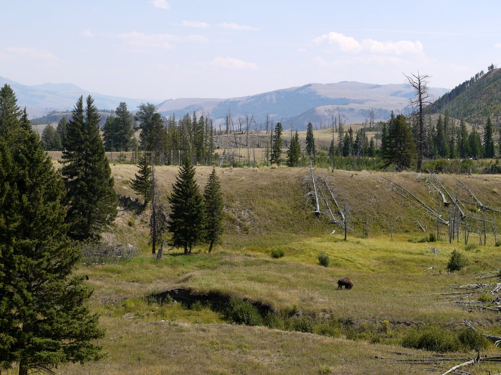 Blacktail Deer Plateau, Yellowstone National Park, Wyoming