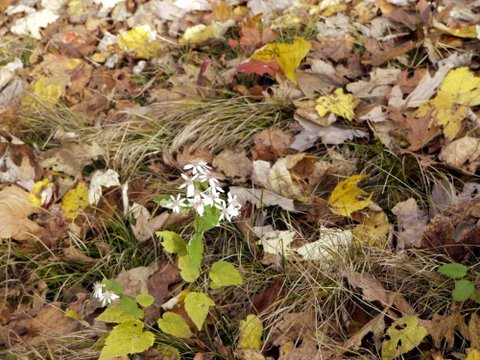 Wildflowers, Black Rock Forest, Orange County, New York