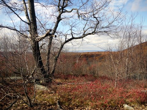 Red Fall colors, Black Rock Forest, Orange County, New York