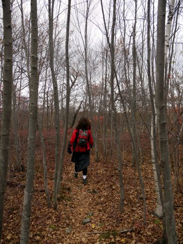 Hiking on a trail covered with fallen leaves, Black Rock Forest, Orange County, New York