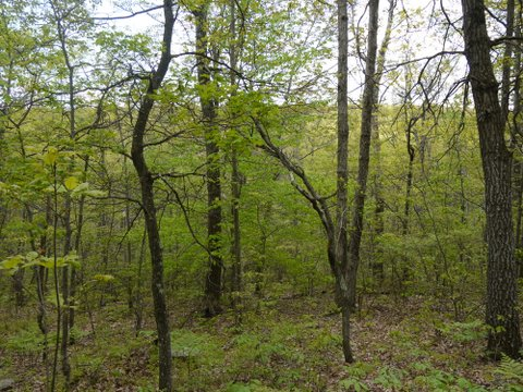 Wooded area on Monument Trail, High Point State Park, Sussex County, New Jersey