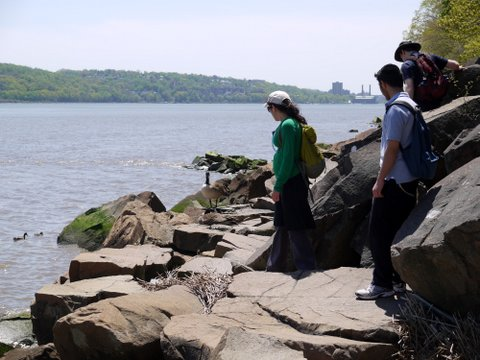 Hiking past nesting Canadian geese, Palisades Interstate Park, Bergen County, New Jersey