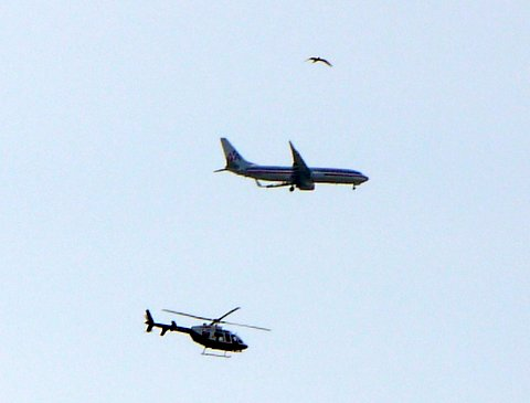 Bird, Airplane, and Helicopter