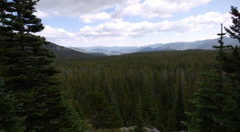 Forest and mountains, Rocky Mountain National Park, Colorado