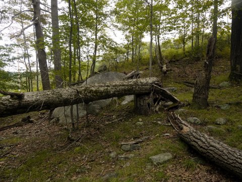 Fallen tree, Harriman State Park, Rockland County, New York