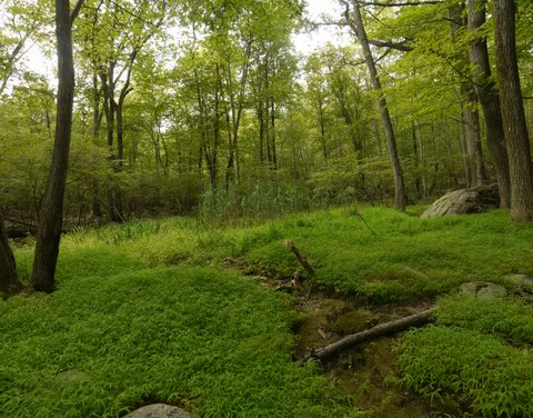 Verdant Clearing, Suffern-Bear Mountain Trail, Harriman State Park, Rockland County, New York