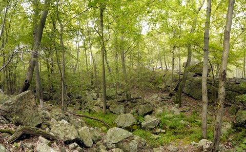 Valley of Dry Bones, Suffern-Bear Mountain Trail, Harriman State Park, Rockland County, New York