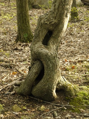 Tree trunk with infinity shape