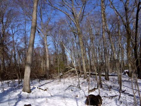 Snowy day in the woods, Caumsett State Historic Park Preserve, Suffolk County, New York