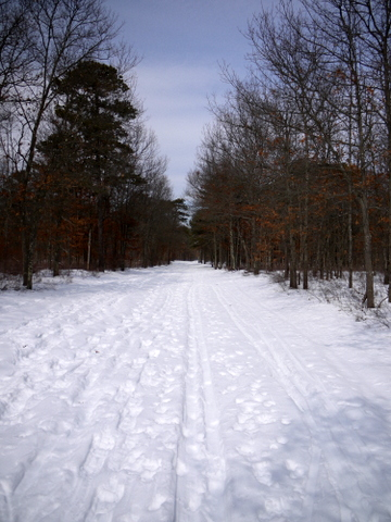 Snowy green trail, Connetquot River State Park Preserve, Suffolk County, New York