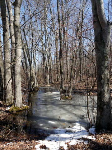 Icy ground, Great Swamp National Wildlife Refuge, Morris County, New Jersey
