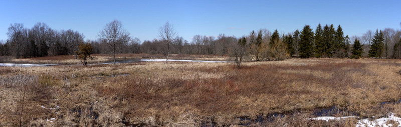 Panorama of grassy field, Great Swamp National Wildlife Refuge, Morris County, New Jersey