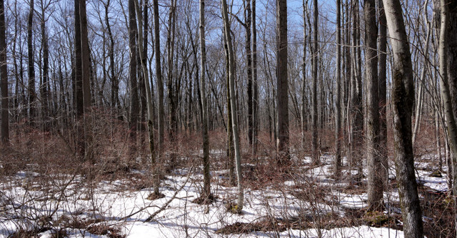 Snowy terrain beside boardwalk, Great Swamp National Wildlife Refuge, Morris County, New Jersey