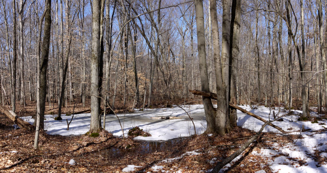 Blue trail, Great Swamp National Wildlife Refuge, Morris County, New Jersey