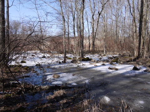 Wet portion of the blue trail, Great Swamp National Wildlife Refuge, Morris County, New Jersey