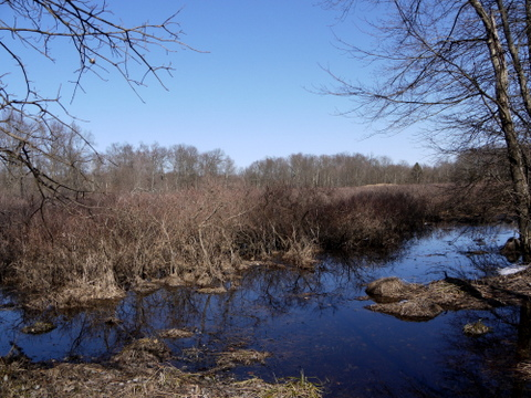 Wetlands, Great Swamp National Wildlife Refuge, Morris County, New Jersey