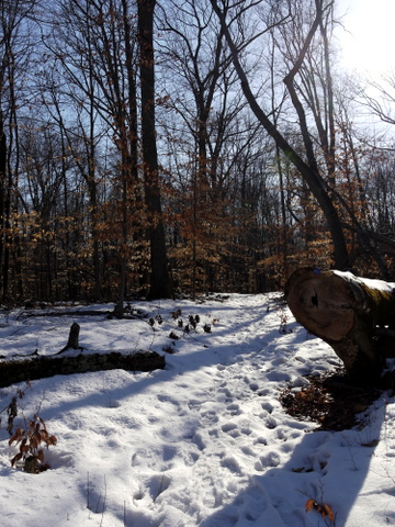 Snowy spot on the blue trail, Great Swamp National Wildlife Refuge, Morris County, New Jersey