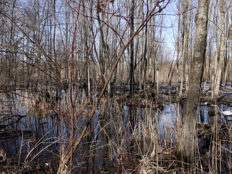 Colorful wetlands, Great Swamp National Wildlife Refuge, Morris County, New Jersey