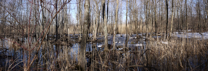 Panorama of wetlands, Great Swamp National Wildlife Refuge, Morris County, New Jersey