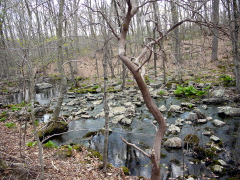 Stream, Devil's Den Preserve, Fairfield County, Connecticut