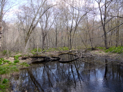 Pond, Devil's Den Preserve, Fairfield County, Connecticut