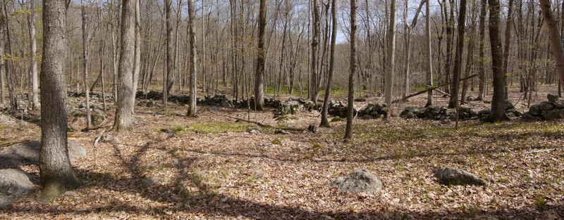 Stone wall, Devil's Den Preserve, Fairfield County, Connecticut