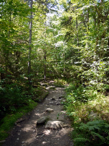 Monroe Trail, Camel's Hump State Park, Chittenden & Washington Counties, Vermont