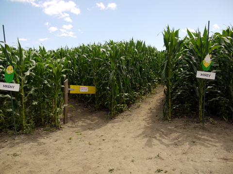 Entrance, Great Vermont Corn Maze, Danville, Caledonia County, Vermont