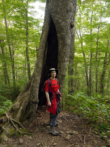 Batya in front of hollow tree, Killington Peak, Rutland County, Vermont
