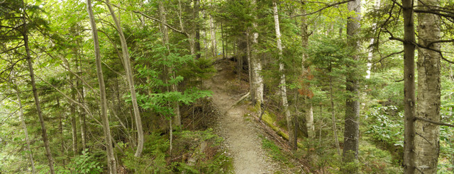Haselton Trail, Mt. Mansfield, Chittenden County, Vermont