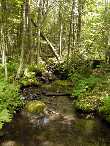 Stream, Laraway Mountain, Long Trail State Forest, Lamoille County, Vermont