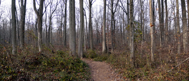 Trail, Sourland Mountain Preserve, Somerset County, New Jersey