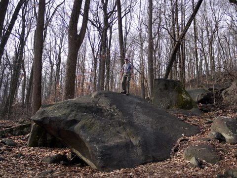 Charlie climbs a boulder, Sourland Mountain Preserve, Somerset County, New Jersey