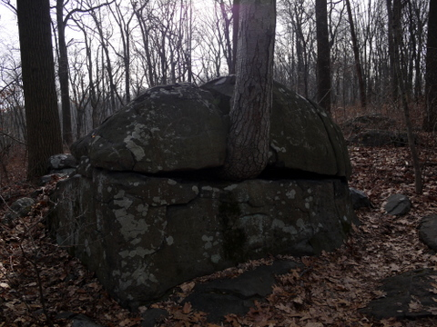 Tree growing from a rock, Sourland Mountain Preserve, Somerset County, New Jersey