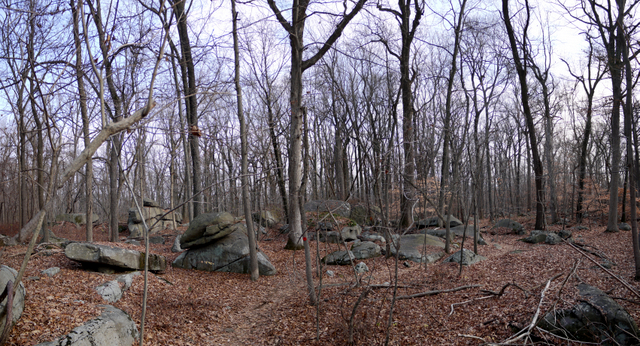 Boulder field, Sourland Mountain Preserve, Somerset County, New Jersey