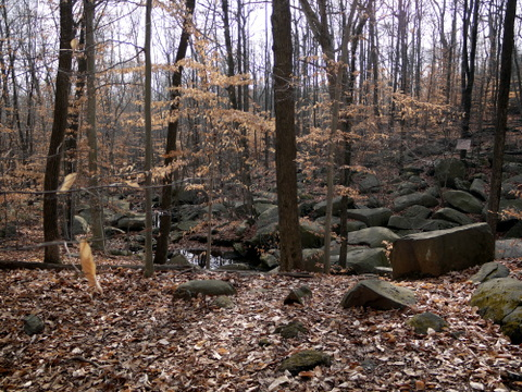 Roaring Brook, Sourland Mountain Preserve, Somerset County, New Jersey