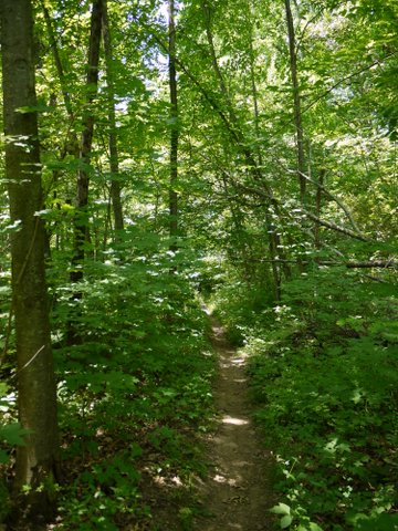Deer Path Trail, Allamuchy Mountain State Park, Sussex County, New Jersey