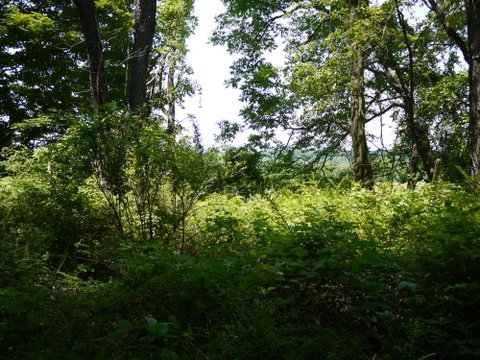 Scenic view from Deer Path Trail, Allamuchy Mountain State Park, Sussex County, New Jersey