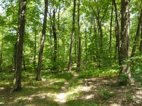 Trail, Allamuchy Mountain State Park, Sussex County, New Jersey