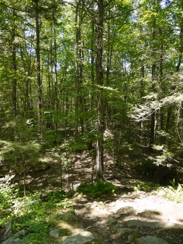Sunshine in the forest, Trout Brook Valley State Park Preserve, Fairfield County, Connecticut