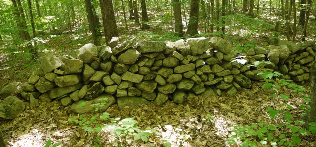 Rock wall, Trout Brook Valley State Park Preserve, Fairfield County, Connecticut