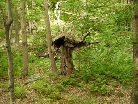 Tree stump, Sterling Forest State Park, Orange County, New York