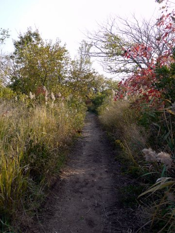 Trail within Salt Marsh Nature Center, Marine Park, Brooklyn (Kings County), New York