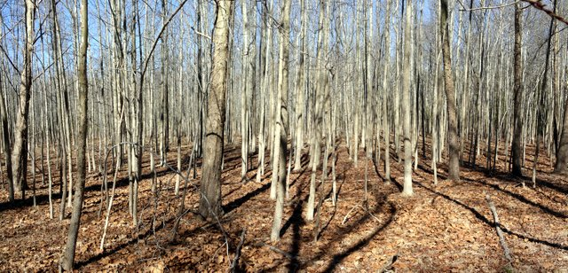 Trees, Allaire State Park, Monmouth County, New Jersey