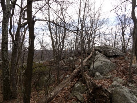 Wood and stone, Ramapo Mountain State Park, Bergen & Passaic Counties, New Jersey