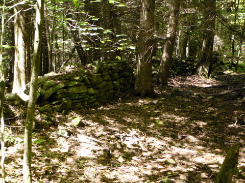 Stone wall, Kaaterskill Wild Forest, Greene County, New York