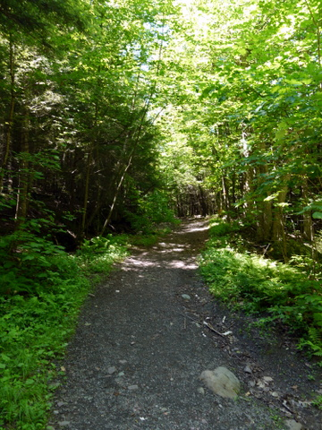 Schutt Road Trail, Kaaterskill Wild Forest, Greene County, New York
