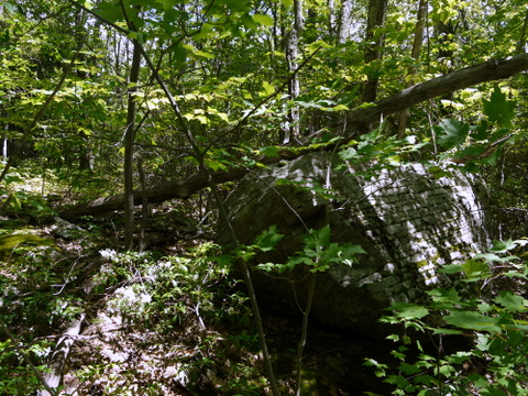 Fallen tree on boulder, Kaaterskill Wild Forest, Greene County, New York